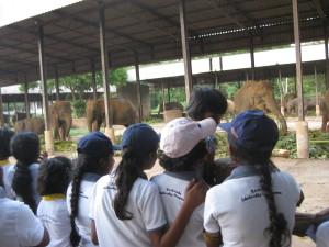 betrachten der Elefanten